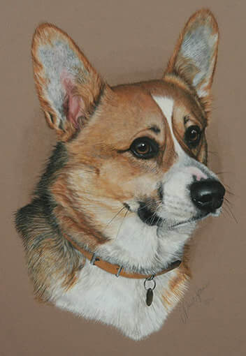 Picture of Welsh Corgi