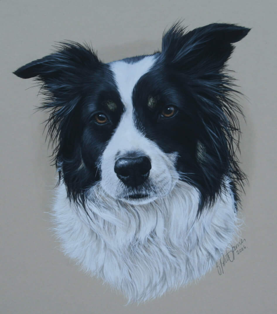 Painting of Collie Head