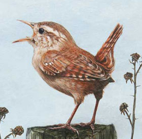 Painting of Wren on Post & Link to Wildlife Section