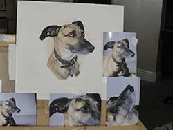 Photograph 1 Sharon Price-James artist easel showing how paints pet portraits and pet portraiture from several different photographs at oncehow paints pet portraits and pet portraiture from several different photographs at oncehow she wortks from several differnet photographs at once