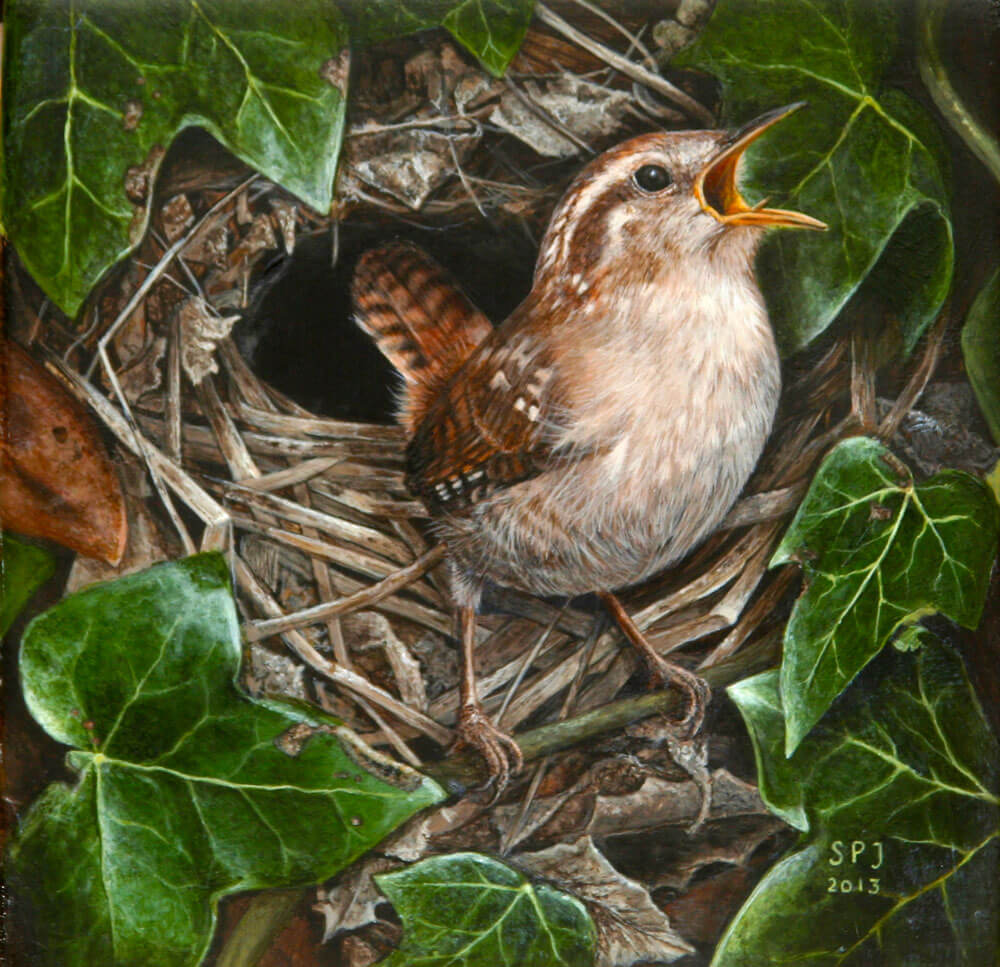 painting of Wren on Nest by Sharon Price-james